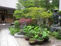 04-1)    17.05.25 鎌倉「成就院」参拝
