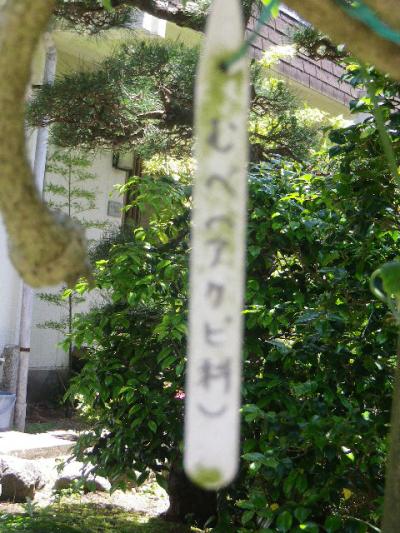 05-1) むべ(アケビ科) _    17.05.29 鎌倉「大巧寺」イワガラミ咲いたよっ!