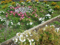 C02-1)  地面下が防火水利になっている花壇   17.06.14 鎌倉「光明寺」山門に向かって左側塀周辺の花
