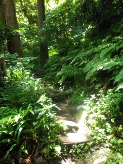 J01) 本殿前左方向、登山道入り口。 17.06.15 鎌倉「佐助稲荷神社」参拝