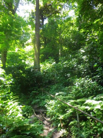 J03)  手摺りが増設され、以前よりも遥かに整備が進んだ登山道方向。 17.06.15 鎌倉「佐助稲荷神社」参拝