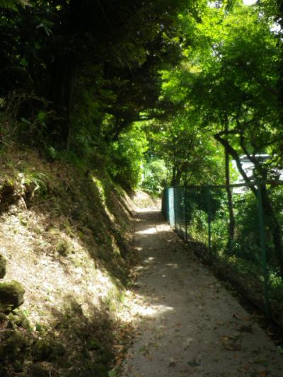 C02)  大殿裏、古道の階段手前から引き返した。    17.06.23 鎌倉「光明寺」記主庭園の蓮が咲き始めた
