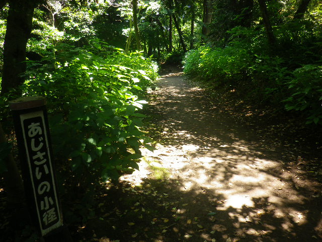 c01-1) ' あじさいの小径 '。 ' 葛原岡神社駐車場 ' 谷側外縁から ' 化粧坂 ' 下り口の方向。  「源氏山公園 _ 北西地域」