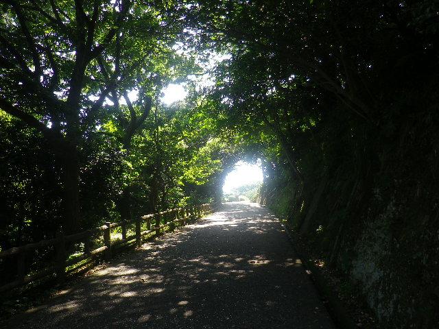 01)    17.07.07 逗子「披露山公園」 七夕とは関係なくテキトーに撮った