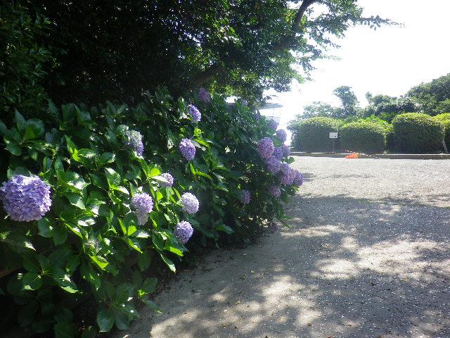 02)   17.07.07 逗子「披露山公園」 七夕とは関係なくテキトーに撮った