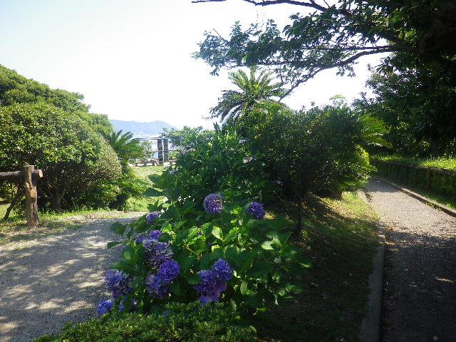 06)   17.07.07 逗子「披露山公園」 七夕とは関係なくテキトーに撮った