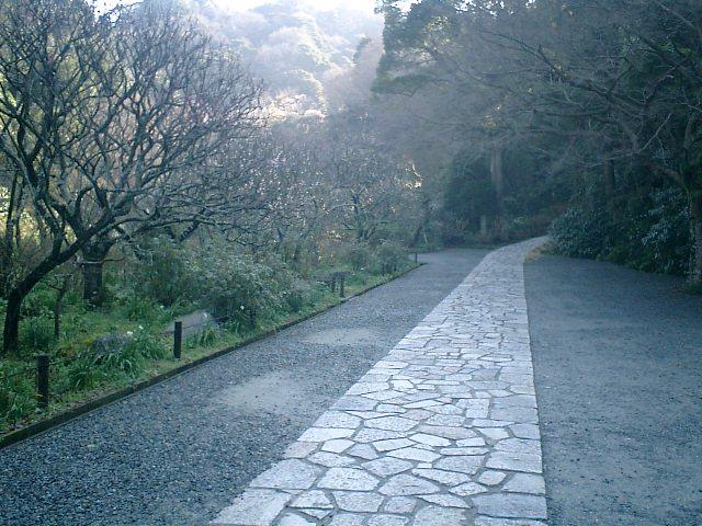 A01    07.02.21 鎌倉「瑞泉寺」梅の季節