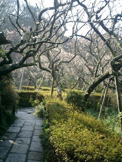 E02    07.02.21 鎌倉「瑞泉寺」梅の季節