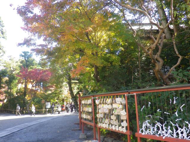 E01) 舞殿周辺から柳原神池方向 17.11.24 初冬の 鎌倉「鶴岡八幡宮」