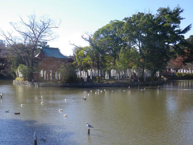 G01) 源平池の ' 源氏池 ' 側  17.11.24 初冬の 鎌倉「鶴岡八幡宮」
