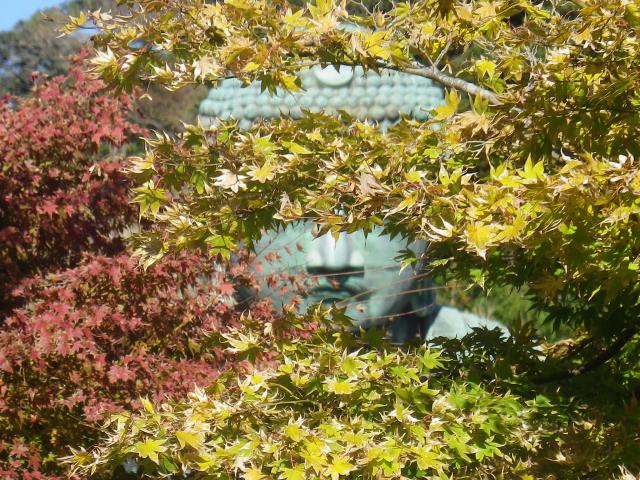 03-4)16.11.25 鎌倉「高徳院」アソコから覗いた