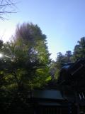 04-1)   17.11.25 初冬の 鎌倉「御霊神社」