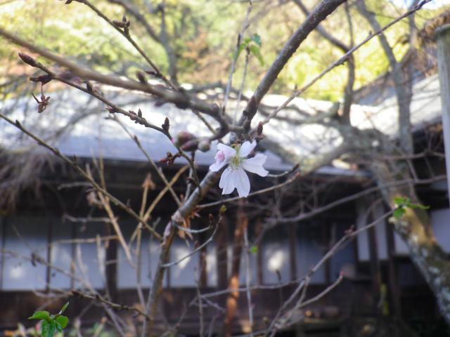 16-4)    17.11.24 初冬の 鎌倉「瑞泉寺」