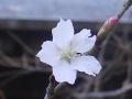16-5)    17.11.24 初冬の 鎌倉「瑞泉寺」