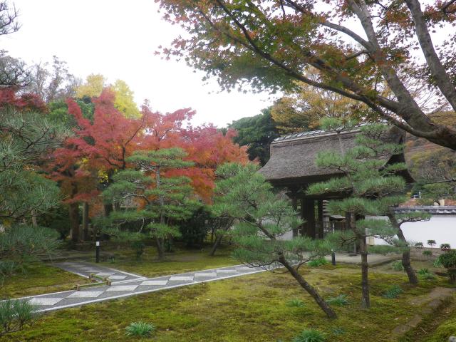 04)    17.11.30 鎌倉「長寿寺」 紅葉の頃