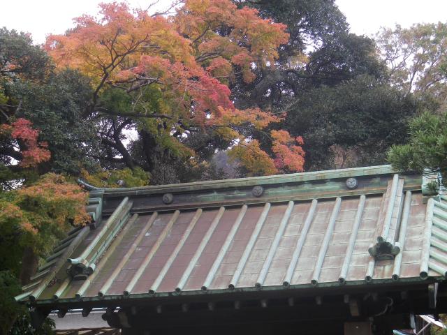 05)  総門(惣門)の屋根  17.11.30 鎌倉「英勝寺」塀の外から紅葉狩り