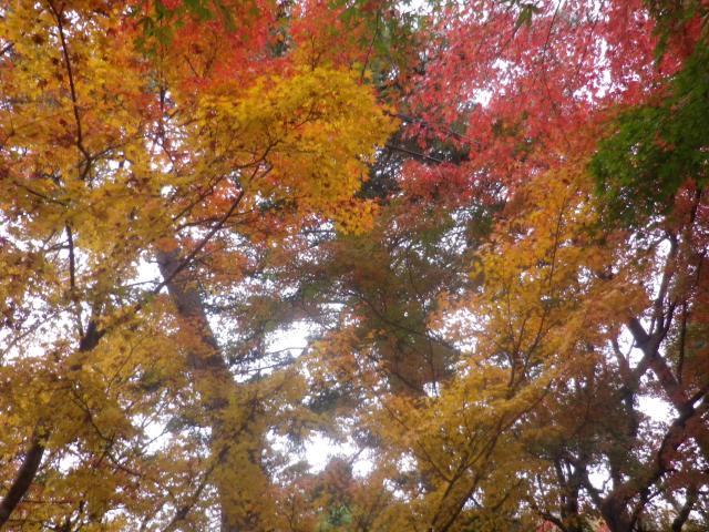 02)    17.12.01 扇ヶ谷支谷周辺民家さまの紅葉を愛でさせていただいた  _ 鎌倉市扇ガ谷
