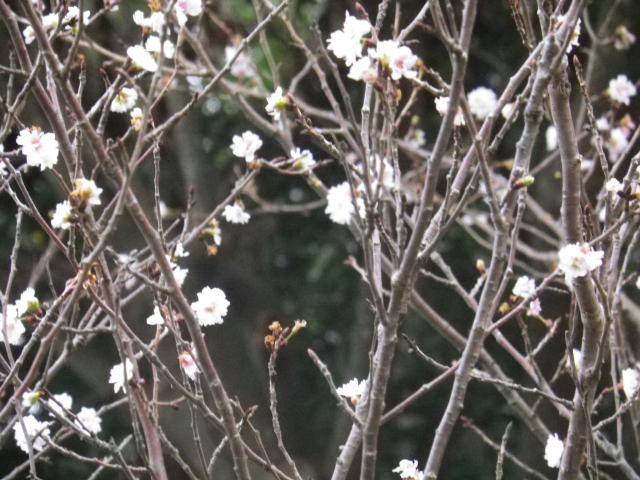 07-2)    17.11.30 鎌倉「龍隠庵」紅葉の頃