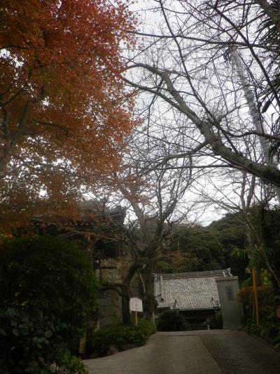 01)    17.11.30 初冬の 鎌倉「薬王寺」