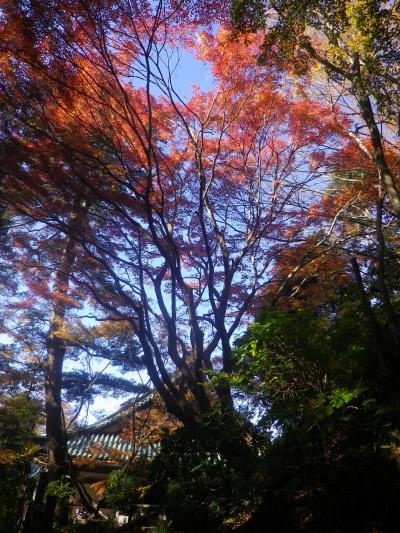 B04)  本堂周辺   17.12.06 鎌倉「妙本寺」紅葉の頃