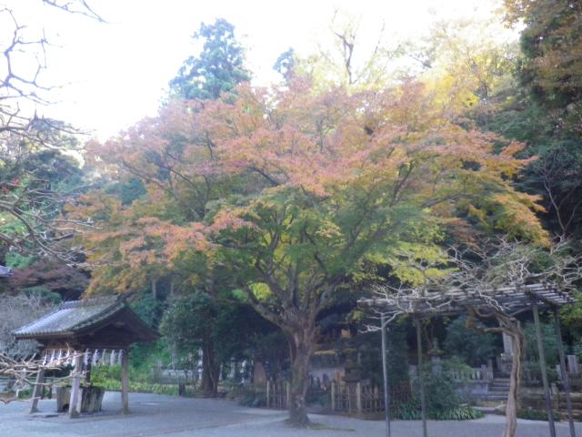 D01)   手水舎周辺  17.12.06 鎌倉「妙本寺」紅葉の頃