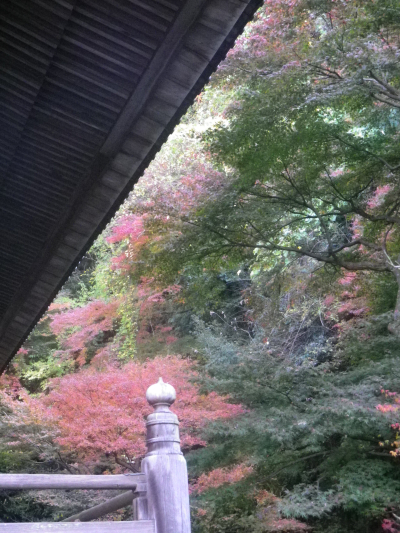 F06)  祖師堂周辺 _ 右側の比企一族墓所沿い  17.12.06 鎌倉「妙本寺」紅葉の頃