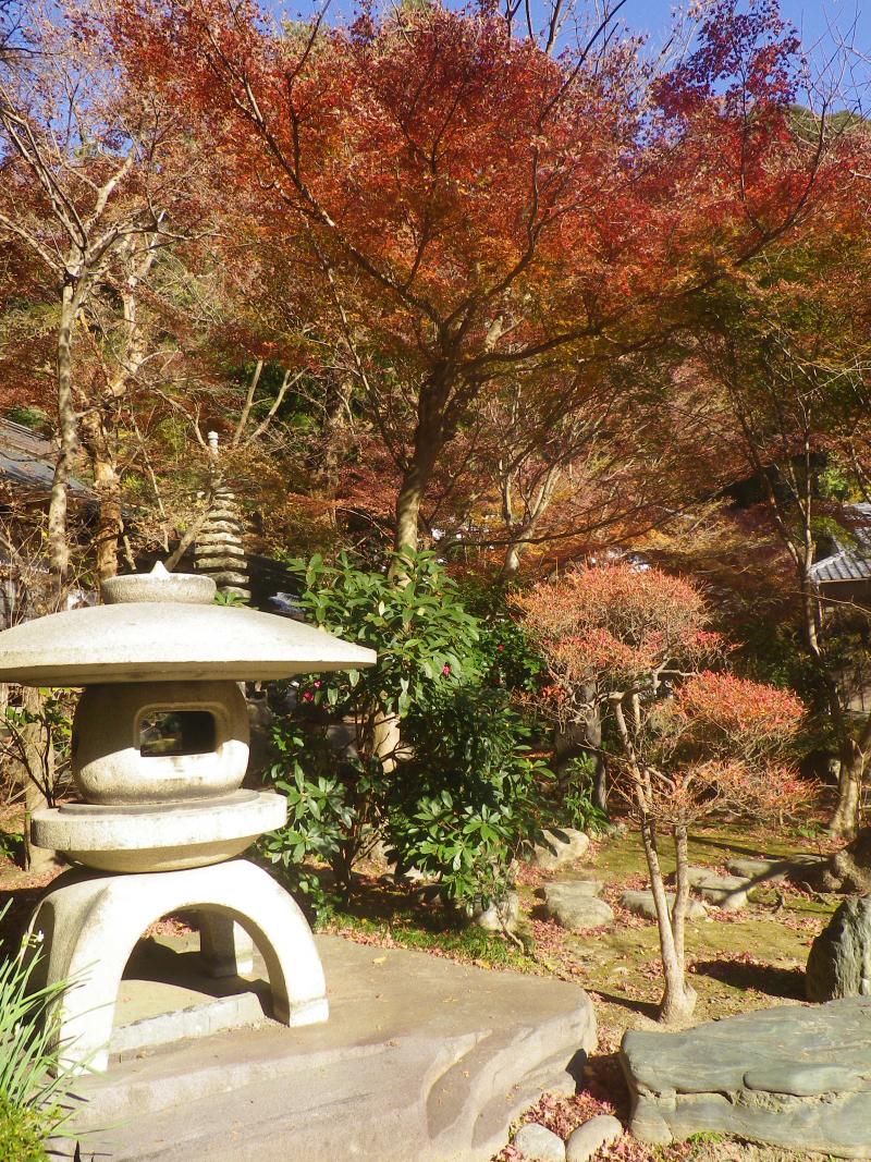 05)    17.12.06 初冬の 鎌倉「覚園寺」