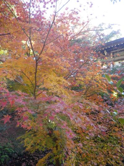 B07)    柳原神池の周辺   17.12.06 鎌倉「鶴岡八幡宮」銀杏が散って赤い葉が映える頃