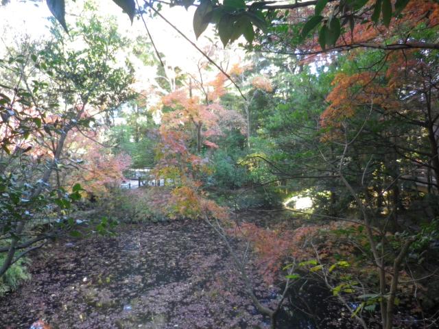 B08)    柳原神池の周辺   17.12.06 鎌倉「鶴岡八幡宮」銀杏が散って赤い葉が映える頃