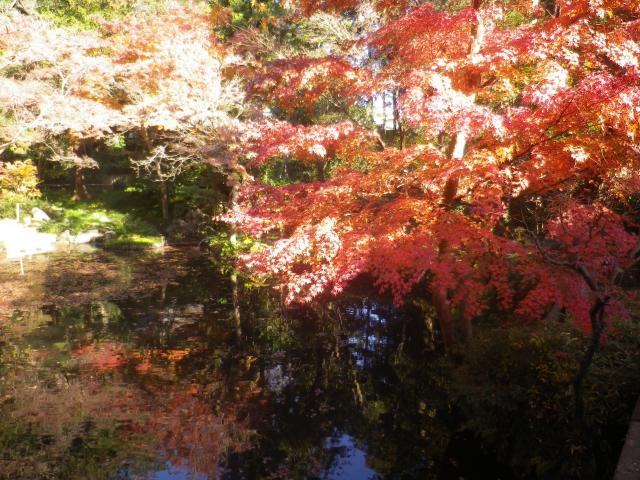 B10)     柳原神池の周辺  17.12.06 鎌倉「鶴岡八幡宮」銀杏が散って赤い葉が映える頃