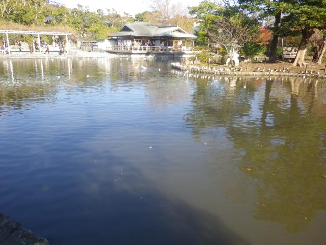C13)    旗上弁財天社 から   17.12.06 鎌倉「鶴岡八幡宮」銀杏が散って赤い葉が映える頃