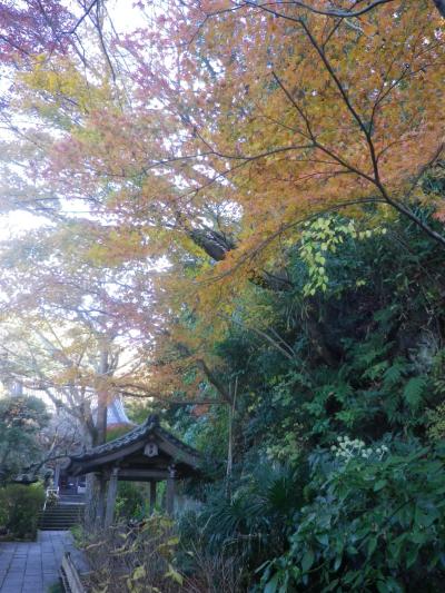 02)   17.12.12 鎌倉「安国論寺」今日は富士山が見えたヨ