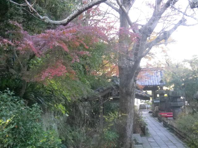 04)   17.12.12 鎌倉「安国論寺」今日は富士山が見えたヨ