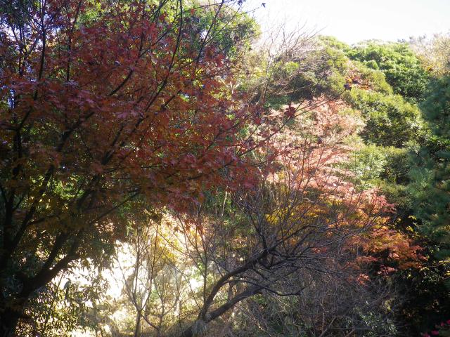 09)   17.12.12 鎌倉「安国論寺」今日は富士山が見えたヨ