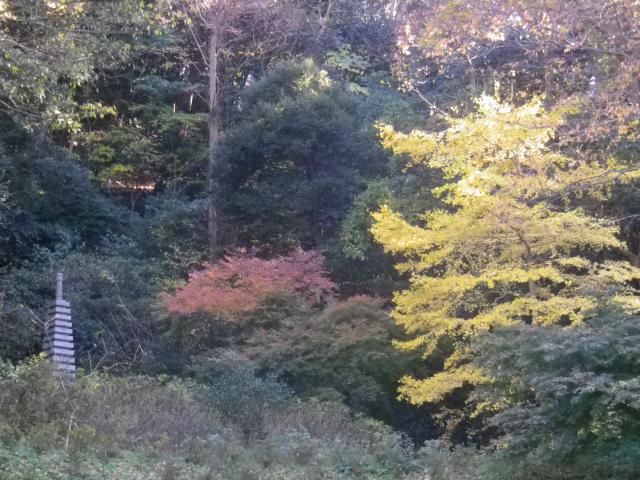 10-1)   17.12.12 鎌倉「安国論寺」今日は富士山が見えたヨ)
