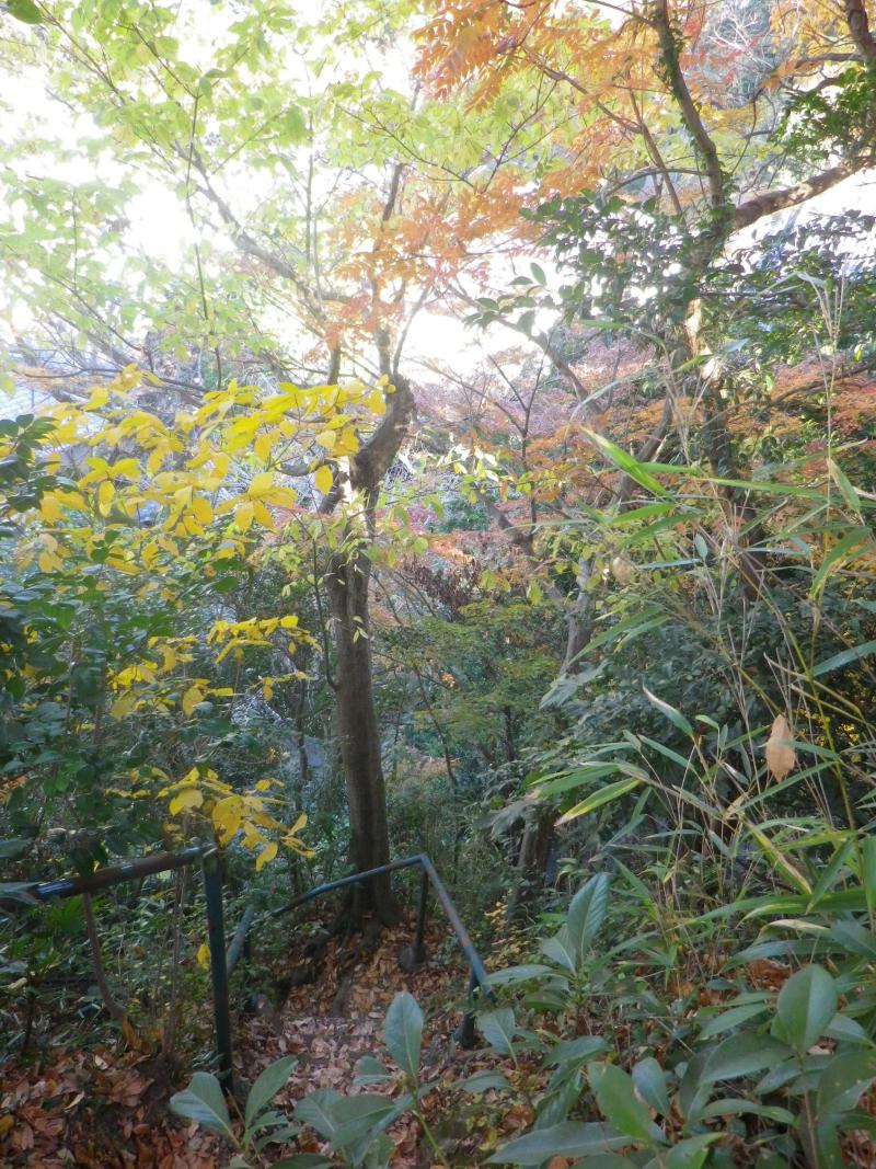 14)   17.12.12 鎌倉「安国論寺」今日は富士山が見えたヨ