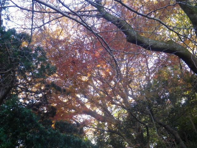 18)   17.12.12 鎌倉「安国論寺」今日は富士山が見えたヨ