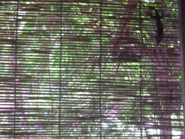 02)   17.08.23 網戸の外にヤモリがいた