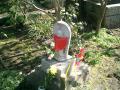 image from i.imgur.com