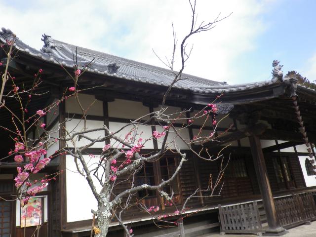 02-1) 18.02.23 鎌倉「浄光明寺」梅が咲く頃