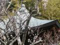05-3) 18.02.23 鎌倉「浄光明寺」梅が咲く頃