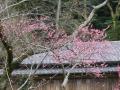 02-2)    18.02.23 旧 川喜多邸の庭、梅の花咲く頃。 _ 鎌倉市雪ノ下「川喜多映画記念館」遊歩道から