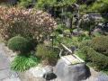 03-1)    18.03.17 鎌倉「九品寺」木瓜が咲いた