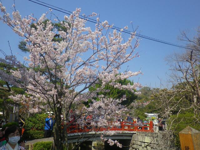 13)   18.03.28 鎌倉「鶴岡八幡宮」満開の桜