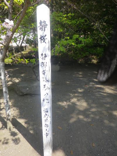 17-3)   18.03.28 鎌倉「鶴岡八幡宮」満開の桜