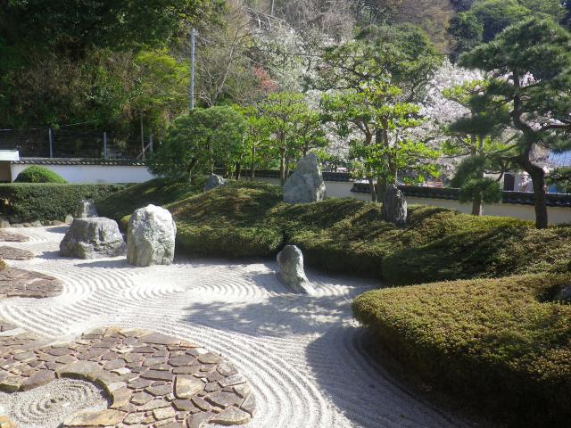 29-2)   18.03.30 鎌倉「光明寺」満開の桜