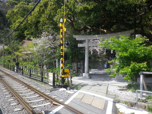 01-1)    18.03.30 鎌倉「御霊神社」の桜