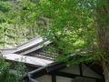 04)    18.04.13 鎌倉「別願寺」の藤が咲き始めた