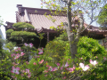 01-1)  名札がなくて、無知な私には名を知らぬ花。    18.04.13 鎌倉「大巧寺」 春の季節が折り返し夏に向かい始めた頃