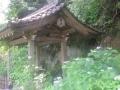 01-1)    18.05.18 鎌倉「安国論寺」ヤマアジサイが咲き始めた